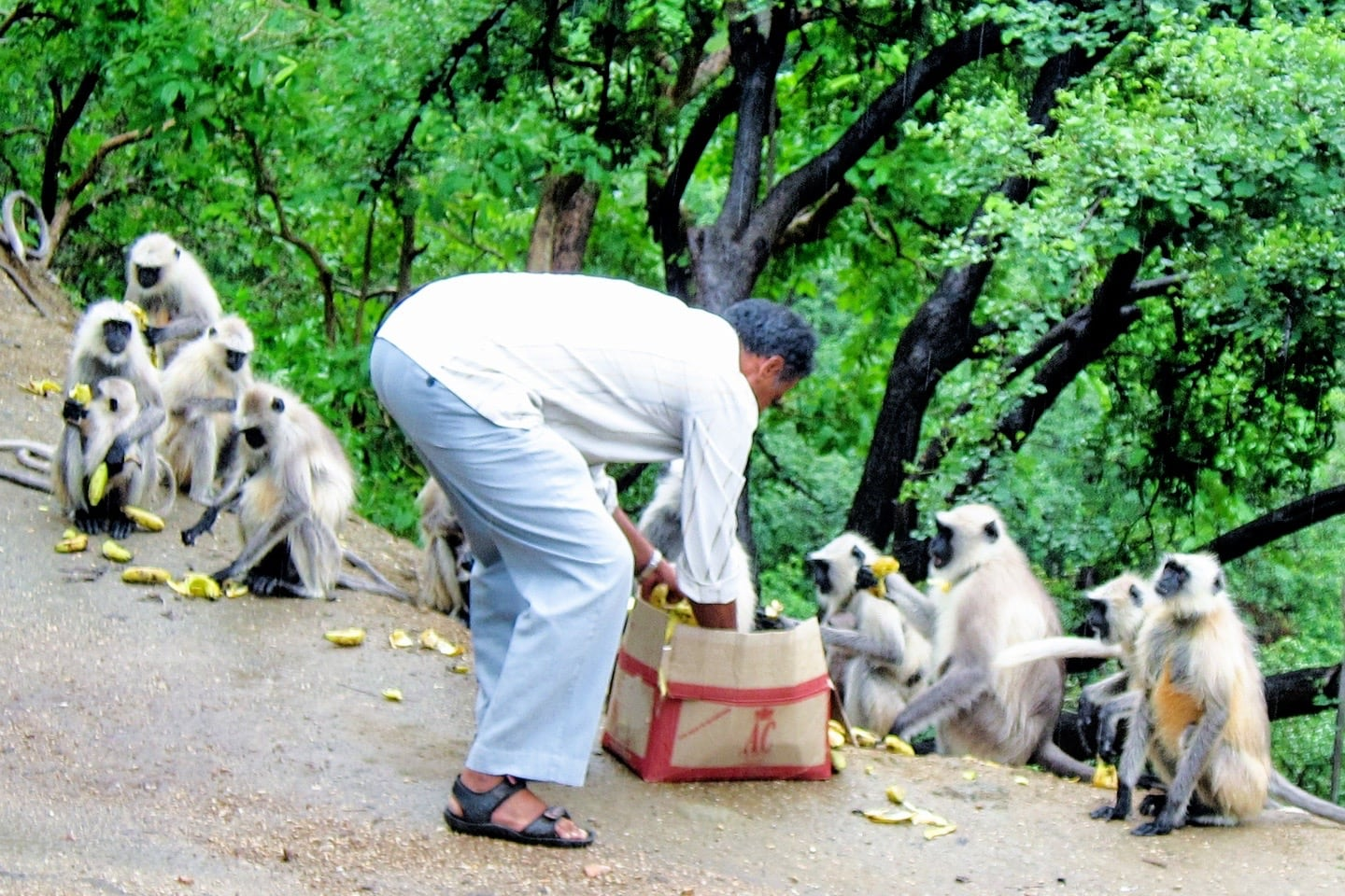 feeding monkeys on bus from jodhpur to udaipur