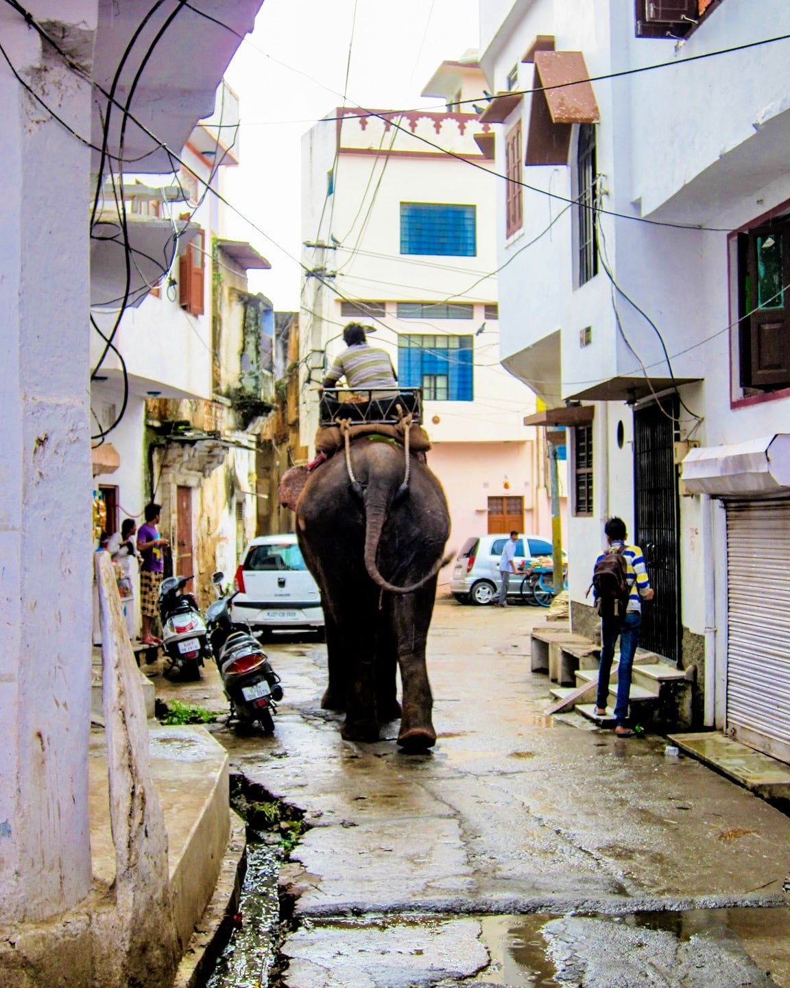 3 days in udaipur elephant traffic