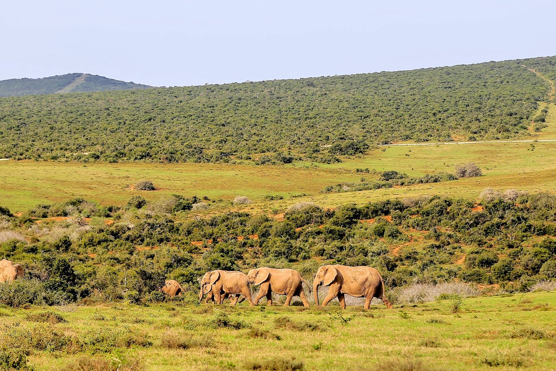 Addo Elephant National Park South Africa