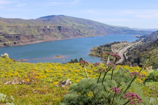 Hiking Tom McCall Point & Rowena Plateau