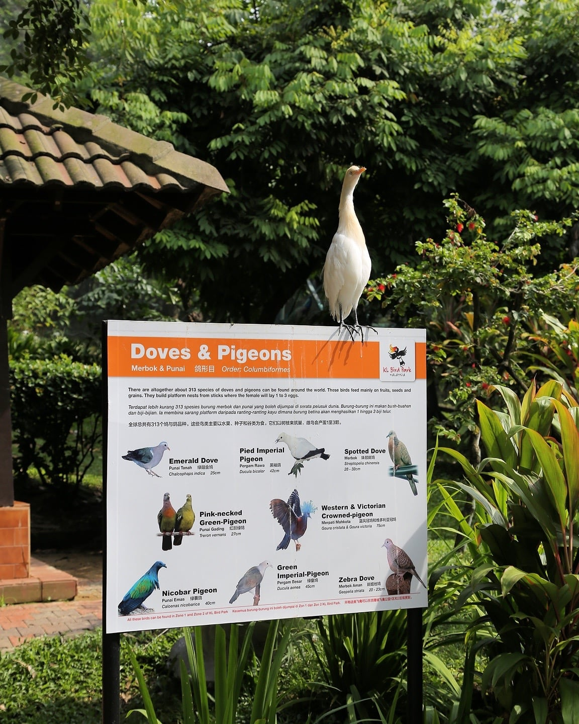 doves and pigeons sign kl bird park