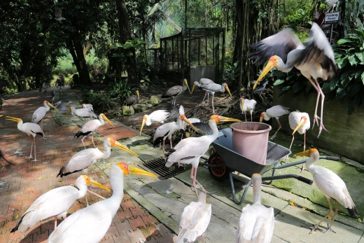 Exploring the World's Largest Aviary