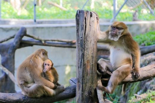 Lao Zoo: What I Wish I Knew Before Visiting