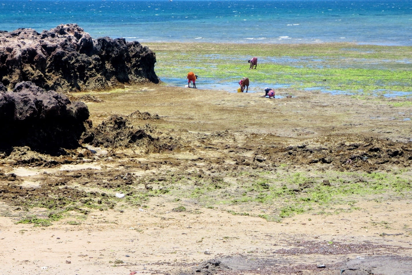 Mozambique Island seaweed harvesting