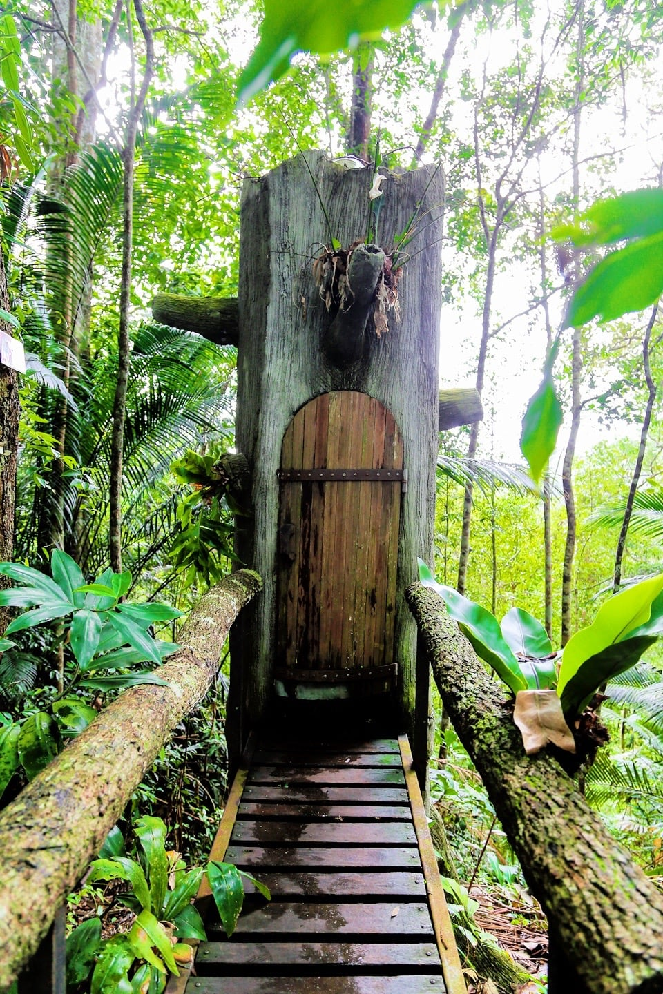 tree trunk toilet Monkey Cup Kopi Hutan coffee