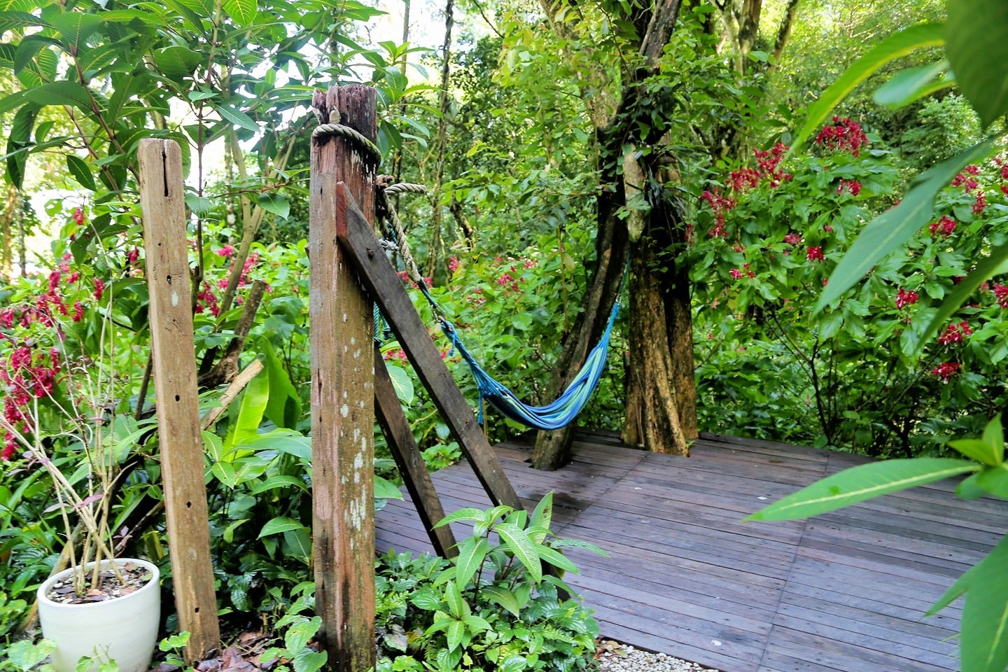 hammock in the jungle