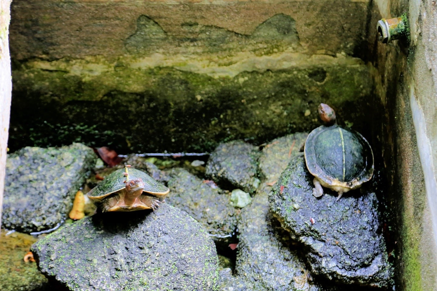 turtles at spice garden
