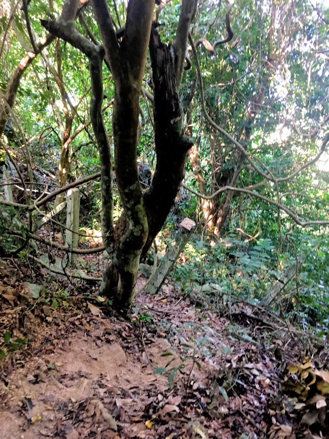 hiking through forest to Kep National Park