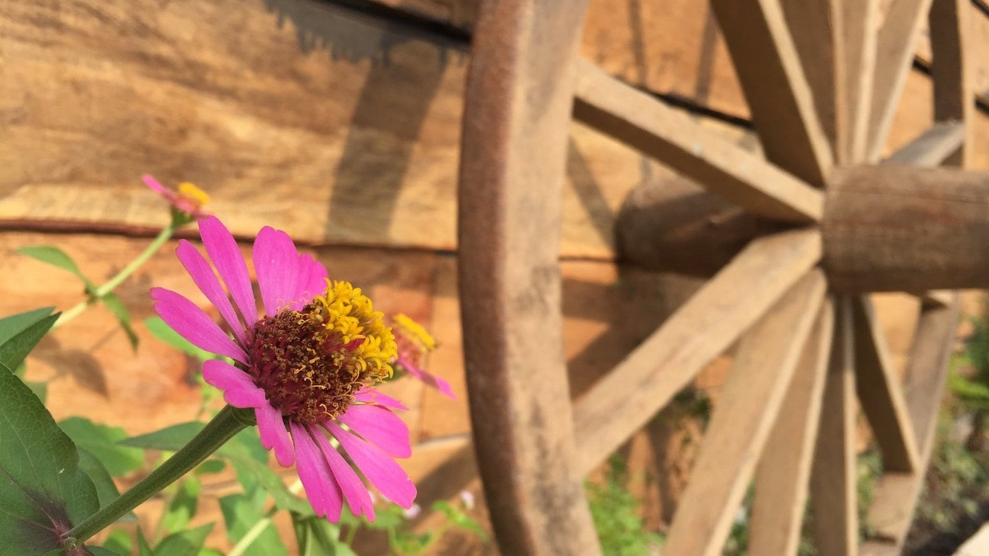 flowers and wagon wheel