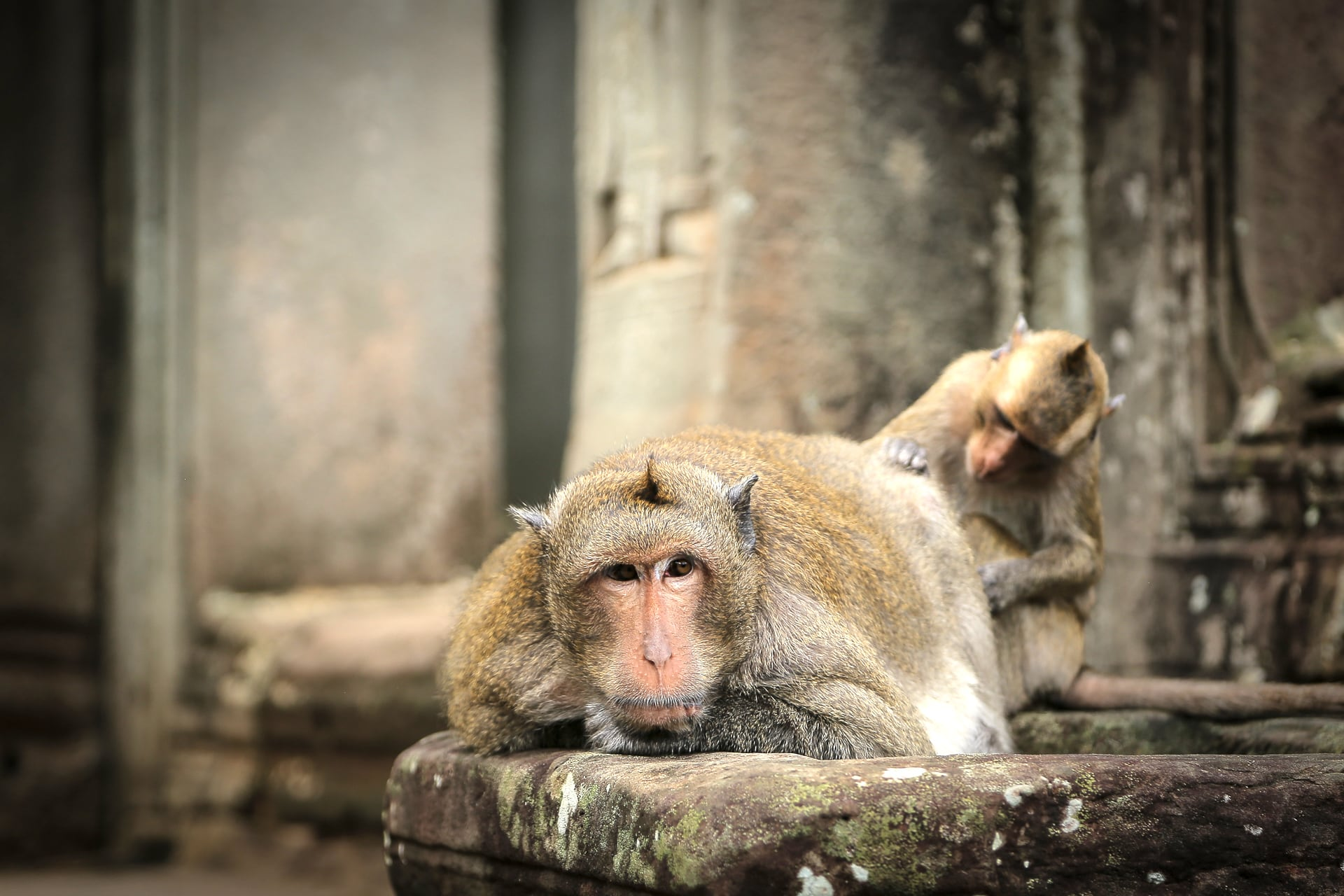 Monkeying Around in Angkor Thom