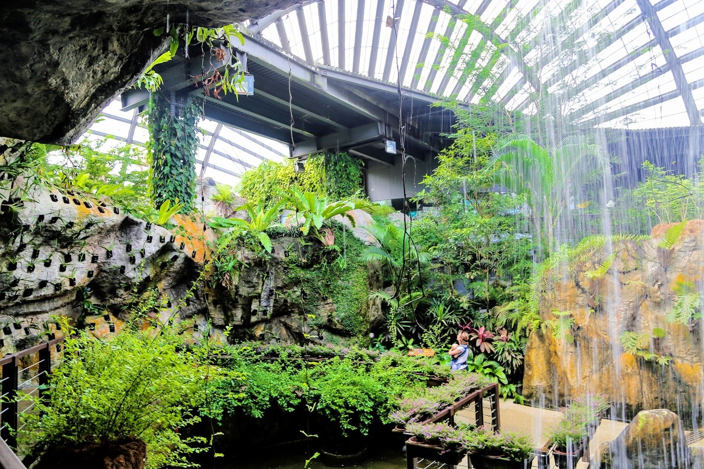 things to do in Penang Butterfly Farm